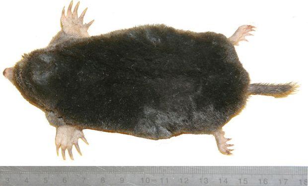 I wonder what mole tastes like?