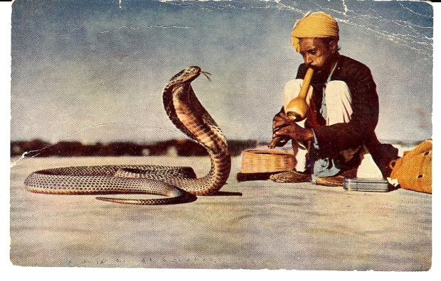 I definitely played the part of the snake.  My eyes were glued to the infomercial and the spell  wasn't broken until I placed my order!