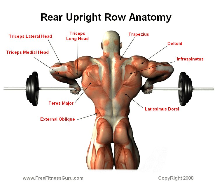 Standing Upright Rows A Personal Favorite Life In The Gym