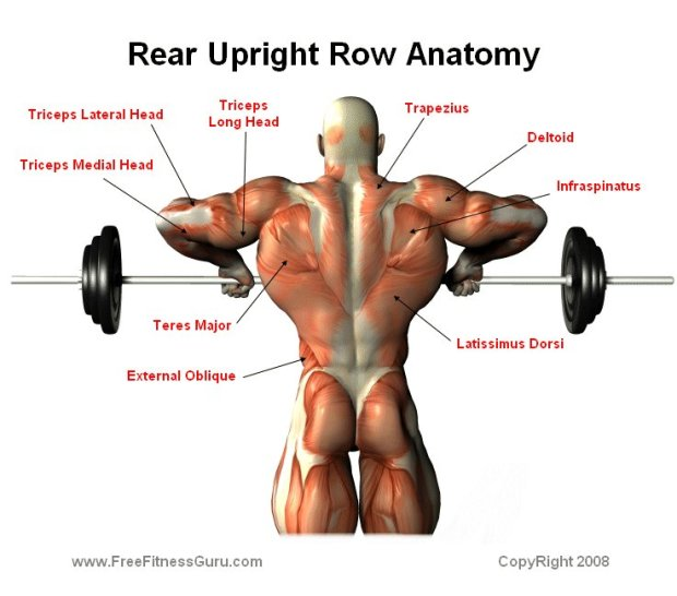 upright row rear