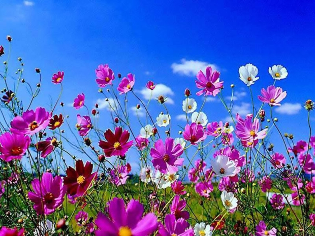 82613-Beautiful-Spring-Flowers