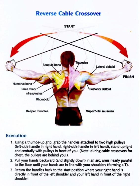 bodybuilding-anatomy-33-638